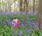 Spring O